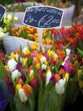 Flower Market, Amsterdam, Netherlands Reproduction photographique par Neil Farrin
