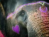 Elephant's Eye. Sonepur Mela, India Fotodruck von Mauricio Abreu