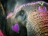 Elephant's Eye. Sonepur Mela, India Photographic Print by Mauricio Abreu