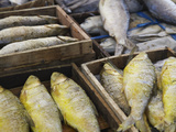 Salted Fish in Pasar Gede Market, Solo, Java, Indonesia Photographic Print by Ian Trower