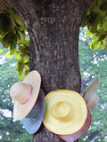 Thailand, Ayutthaya, Wat Chai Watthanaram, Hats Hanging from Tree Photographic Print by Shaun Egan