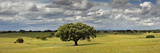 Holm Oaks in the Vast Plains of Alentejo, Portugal Fotoprint van Mauricio Abreu