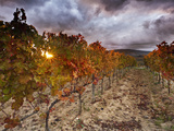 Italy, Umbria, Perugia District, Autumnal Vineyards Near Montefalco Photographic Print by Francesco Iacobelli