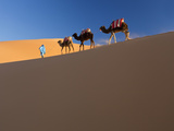 Tuareg Man Leading Camel Train, Erg Chebbi, Sahara Desert, Morocco Photographic Print by Peter Adams