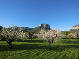 Almond Blossom, Serra De Tramuntana Auf Majorca, Balearics, Spain Photographic Print by Katja Kreder