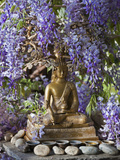 A Small Buddha Shrine Surrounded by Wisteria in Hotel Gangtey Palace, 100-Year-Old Building, Once a Lámina fotográfica por Nigel Pavitt