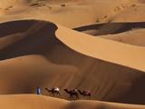 Camels and Dunes, Erg Chebbi, Sahara Desert, Morocco Fotografie-Druck von Peter Adams
