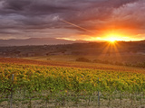 Italy, Umbria, Perugia District, Autumnal Vineyards Near Montefalco Photographie par Francesco Iacobelli