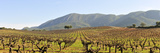 Vineyards in the Arrabida Natural Park, Portugal Photographic Print by Mauricio Abreu
