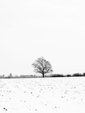 UK, England, Cambridgeshire, Comberton, Winter Fields Photographic Print by Alan Copson