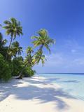 Maldives, Faafu Atoll, Filitheyo Island Fotografiskt tryck av Michele Falzone