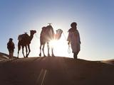 Tuareg Man with Camel Train, Erg Chebbi, Sahara Desert, Morocco Fotografie-Druck von Peter Adams
