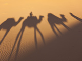 Camel Train Shadows, Erg Chebbi, Sahara Desert, Morocco Photographic Print by Peter Adams