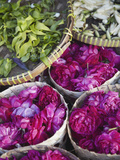 Flowers Prepared for Offerings, Yogyakarta, Java, Indonesia Photographic Print by Ian Trower