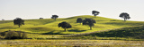 Cork Trees in the Vast Plains of Alentejo. Portugal Photographic Print by Mauricio Abreu