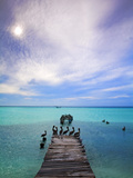 Venezuela, Archipelago Los Roques National Park, Madrisque Island, Pelicans on Pier Fotografisk tryk af Jane Sweeney