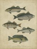Ichthyology III Prints by Abraham Rees