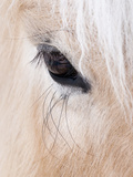 Close-Up of a Horse'S Eye, Lapland, Finland Photographic Print by Nadia Isakova