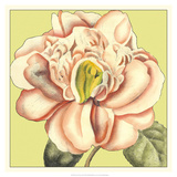 Flower Power II Prints by Deborah Bookman