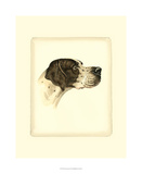 Danchin Pointer Giclee Print by  Danchin