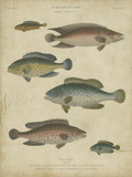 Ichthyology I Posters by Abraham Rees