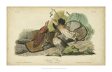 Audubon Ruffed Grouse Giclee Print by John James Audubon