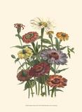 Summer Flowers III Posters
