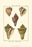 Pyrule Shells, Pl. 434 Prints by Denis Diderot