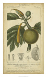 Exotic Botanica IV Giclee Print by  Turpin