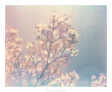 Flowering Dogwood I Posters by Jason Johnson