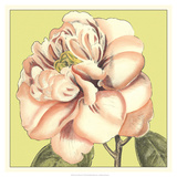 Flower Power IV Prints by Deborah Bookman