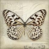 Butterflies Script III Plakater af Amy Melious