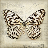 Butterflies Script III Print by Amy Melious