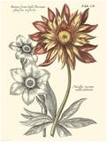 Tinted Floral III Prints by Besler Basilius