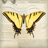 Butterflies Script V Print by Amy Melious
