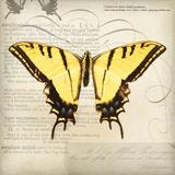 Butterflies Script V Print by Amy Melious