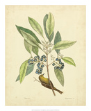 Catesby Bird & Botanical V Prints by Mark Catesby