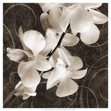 Orchid & Swirls I Kunstdrucke von Christine Zalewski