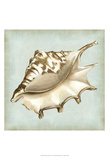 Sea Dream Shells IV Prints by Vision Studio