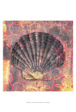 Seashell-Scallop Posters by Elena Ray