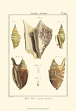 Strombe Shells, Pl. 409 Art by Denis Diderot