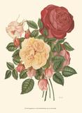 Vintage Roses I Print by  Vision Studio