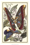 Papillon II Affiches par William Henry Pearson