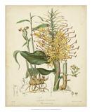 Twining Botanicals VII Giclee Print by Elizabeth Twining