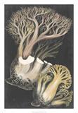 Genus Clavaria III Giclee Print by F. Leuba