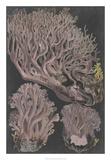 Genus Clavaria IV Giclee Print by F. Leuba