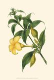 Florilea II Prints by  Edmonston & Douglas