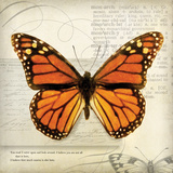 Butterflies Script II Poster by Amy Melious