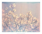 Flowering Dogwood II Art by Jason Johnson