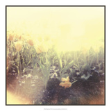 Tulipa Exposta IV Prints by Jason Johnson